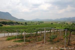 Hua Hin Hills Vineyard - 2